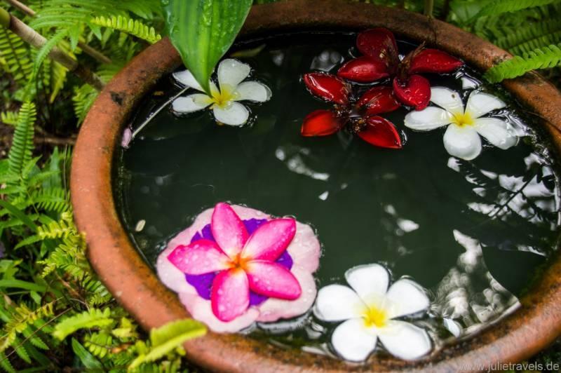 Blüten-Pool
