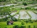 Arbeiter auf Reisterrassen