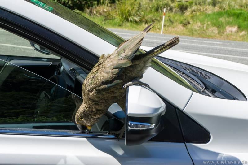 Kea auf dem Auto