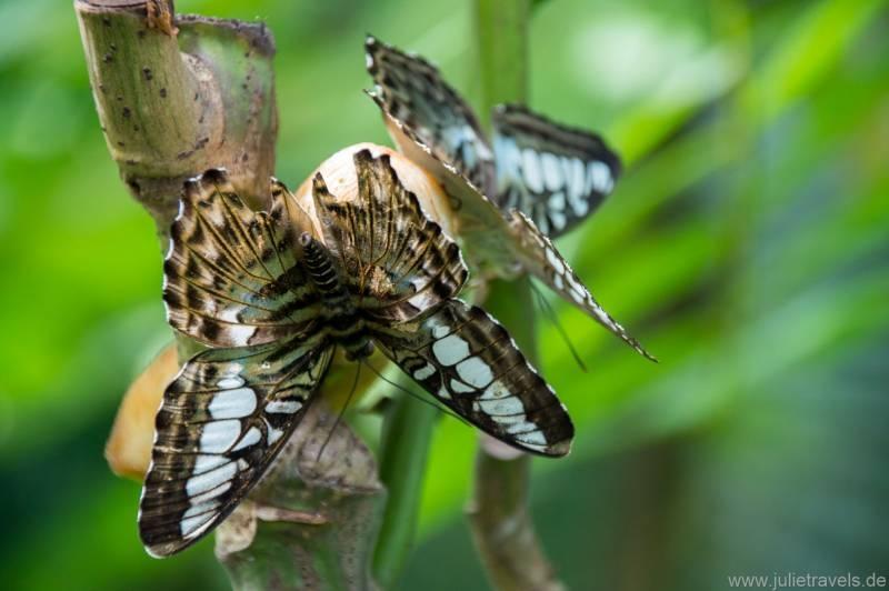 firsches Obst für die Schmetterlinge