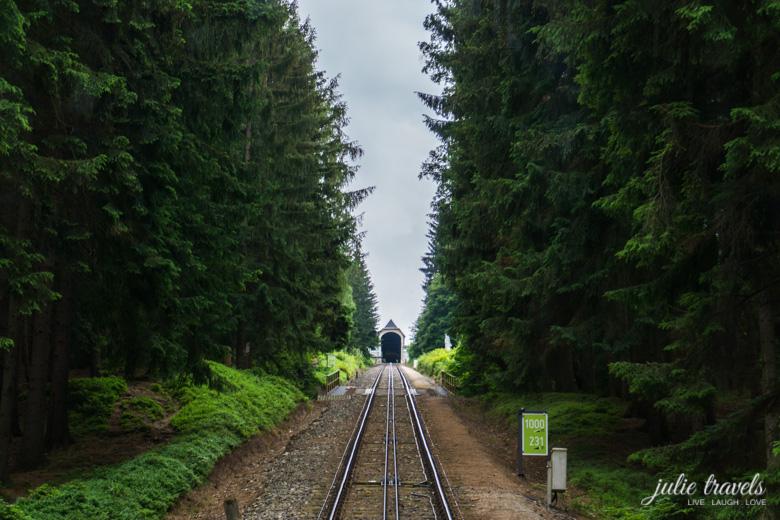 Blick in den dichten Wald